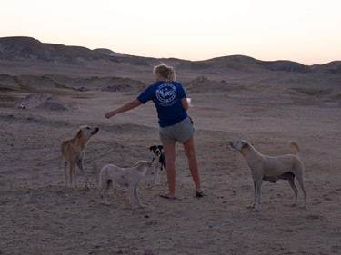 Desert dogs project supported by RSDS!
