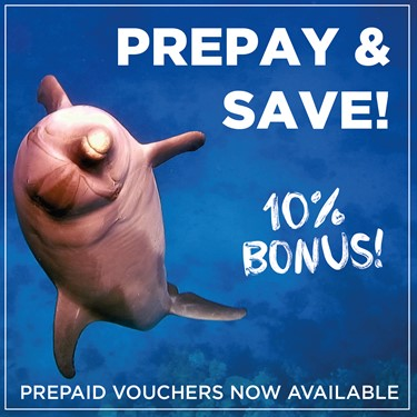 Buy a prepay voucher and receive 10% bonus!