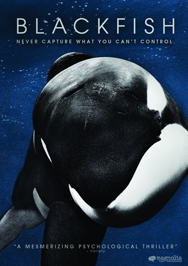 Blackfish movie night in Marsa Shagra