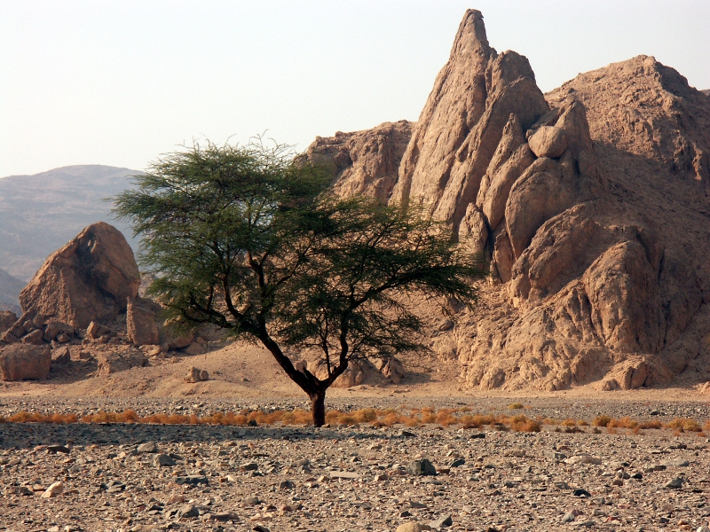 Wadi El Gemal National Park