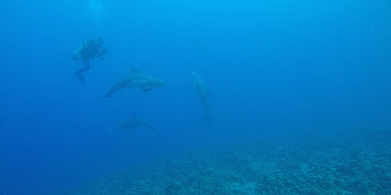 Dolphins at Marsa Shagra House Reef by Hany Hassan